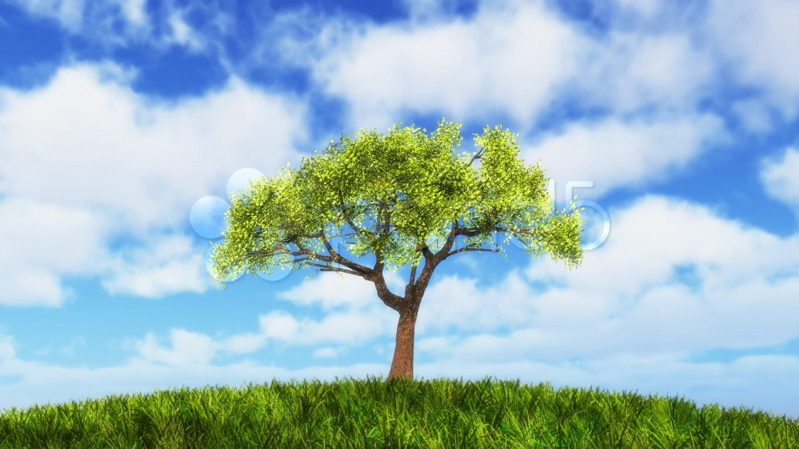 Role of tree